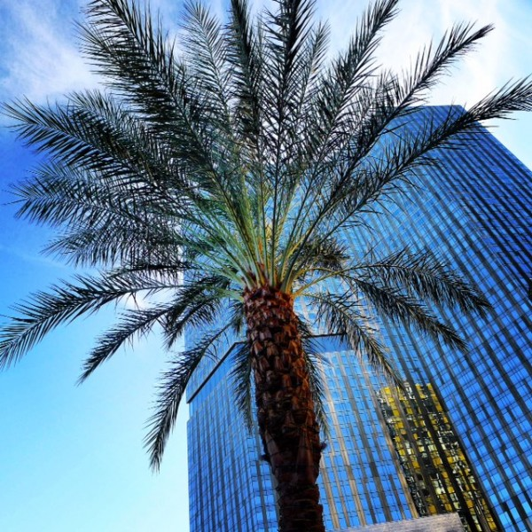 Palm Tree Vegas