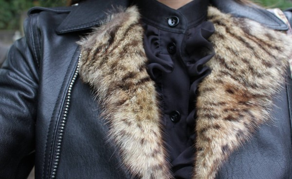 Collar of Leo Biker Saint Laurent Jacket