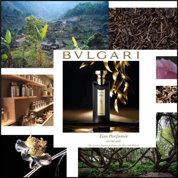 Bulgari_Tea_Noir_Fragrance