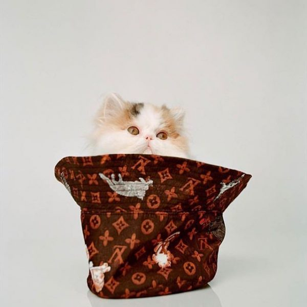 Louis Vuitton X Grace Coddington Catogram Sandra S Closet
